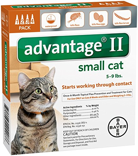 Best Spot On Flea Treatment For Cats And How To Safely Use