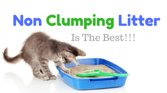 best non clumping cat litter