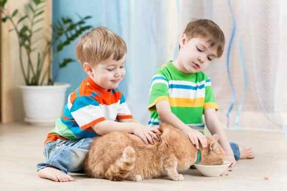 cats help us make new friends