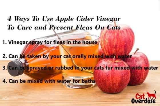 apple cider for flea cure