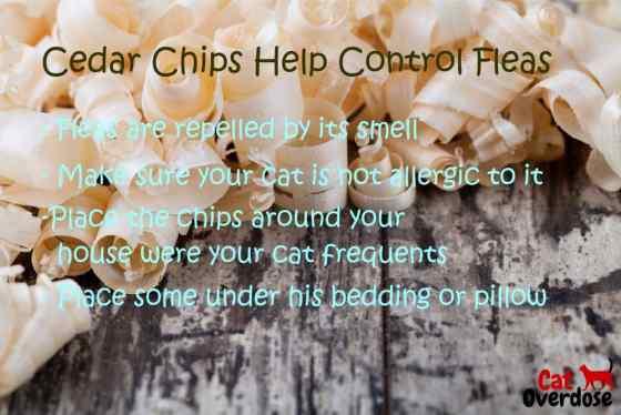 cedar chips for flea control