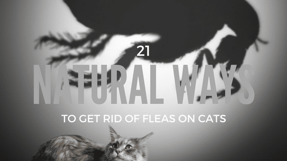 Natural Remedy To Get Rid Of Fleas On Cats