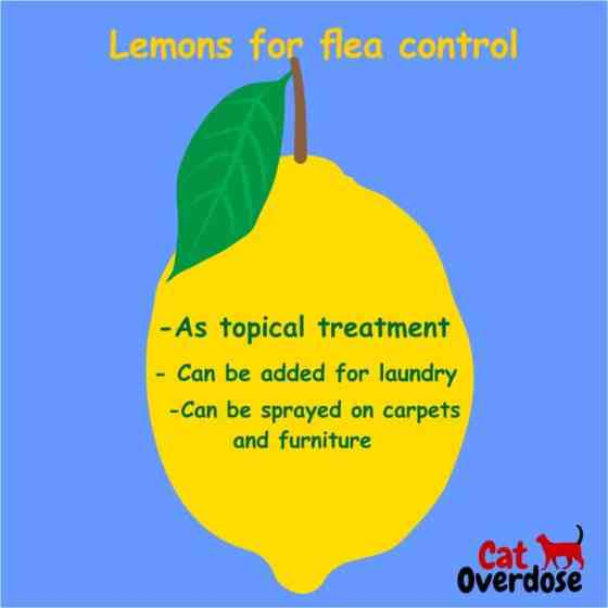 lemons for flea control