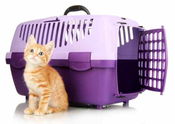 cat carrier review