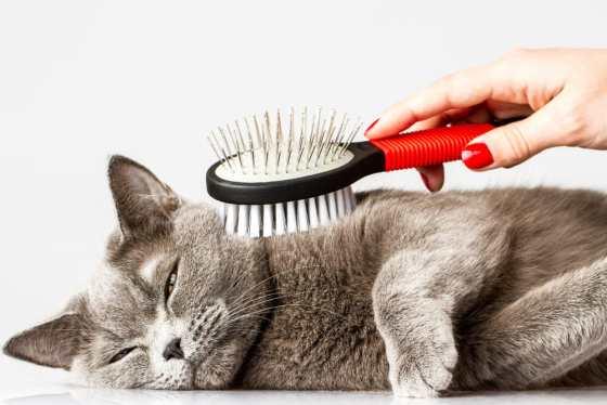 cat brush review