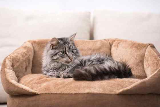 heated cat bed review