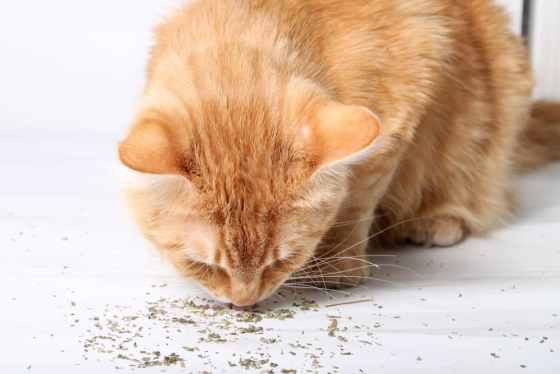 catnip review