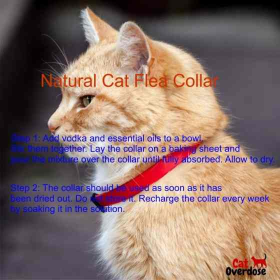 natural flea collar