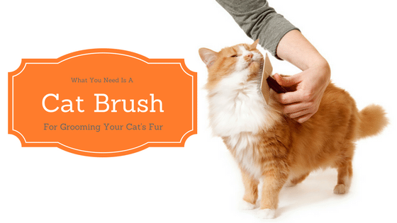 Best cat brush for shedding