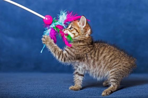 Cat toys review