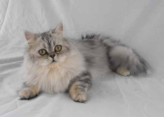 Cat Breed, What Makes Each One Unique? - Cat Overdose
