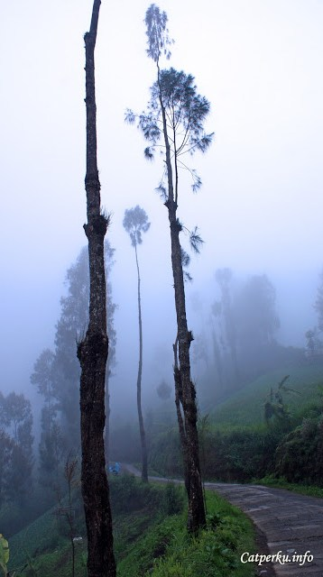 Kabut tipis yang muncul ketika sore hari melewati Desa Ngadas, desa kecil yang akan dilewati ketika menuju Kawasan Taman Nasional Bromo Tengger Semeru dari arah malang.