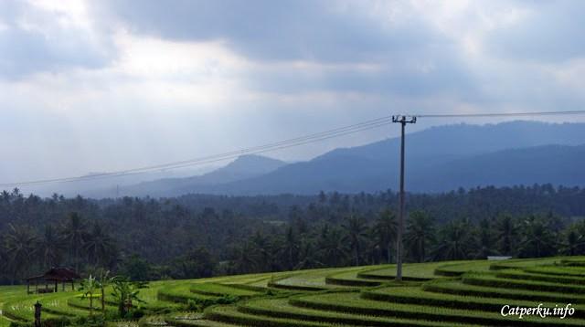 Disekeliling Pulau Bali selalu ada kebudayaan, salah satunya adalah persawahan yang menggunakan sistem Subak yang digunakan untuk manajemen irigasinya untuk mengairi sawah - sawah yang saya foto di Bali Barat ini.
