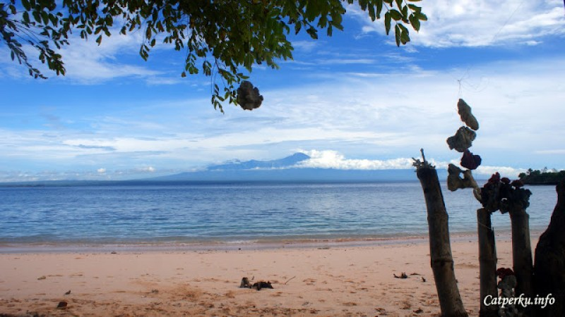 Entah siapa yang iseng bermain karang yang kemudian diikatkan di pohon ini.