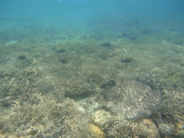 Di sekitar Pulau Menjangan memang, ada banyak ikan yang bergerombol