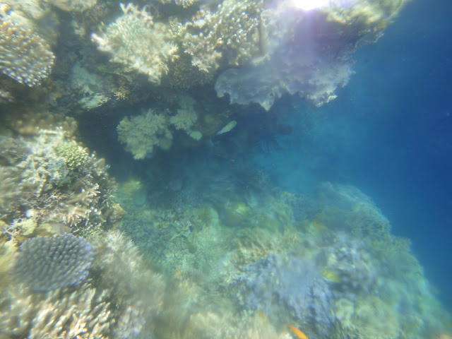 Terumbu karang di sekitar Pulau Menjangan berwarna warni :)