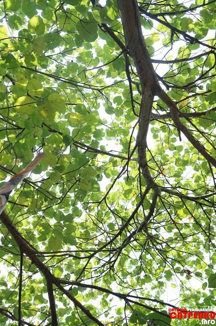 Yang paling saya suka dari Pulau Untung Jawa adalah segarnya udara dan beberapa bagian pulau yang rindang. Tiduran dibawah pohon seperti ini sangat menyenangkan :D