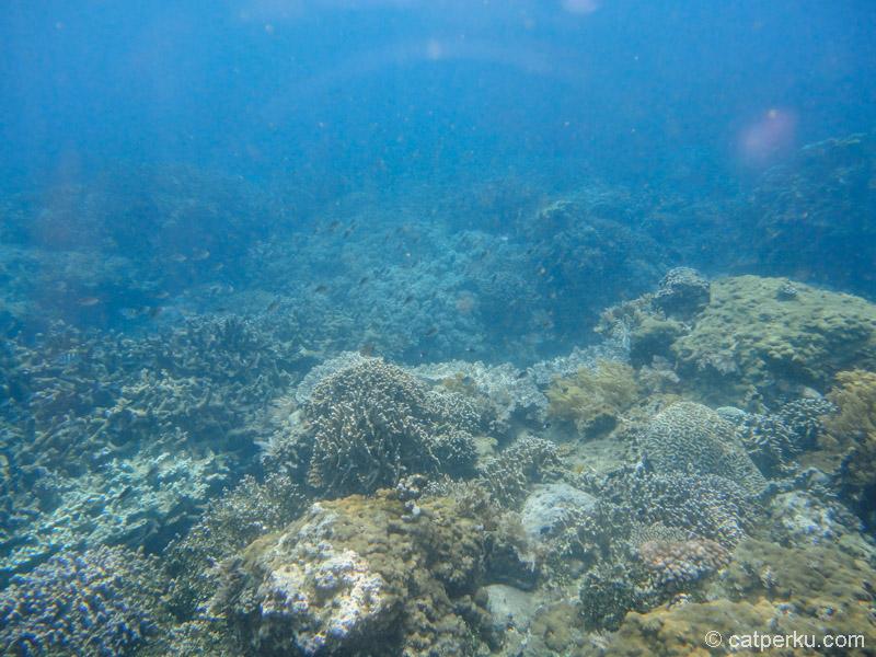 Alam bawah laut Bali menyenangkan untuk dinikmati