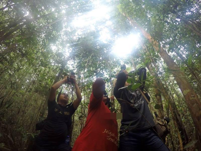 Beginilah aksi para fotografer ketika bertemu Orang Utan di Taman Nasional Sebangau