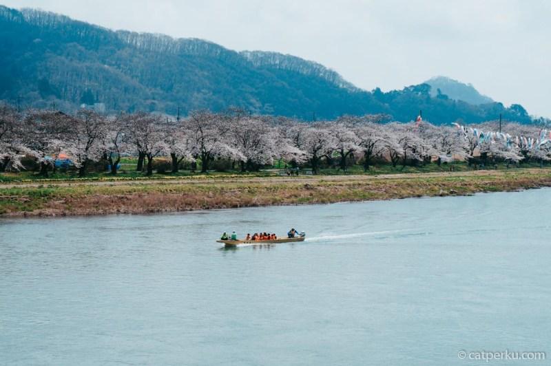 Bisa juga menikmati Sakura di Kitakami sambil naik perahu di sungai Kitakami seperti ini.