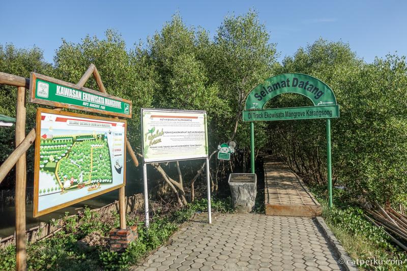 Bisa trekking di tengah hutan mangrove disini