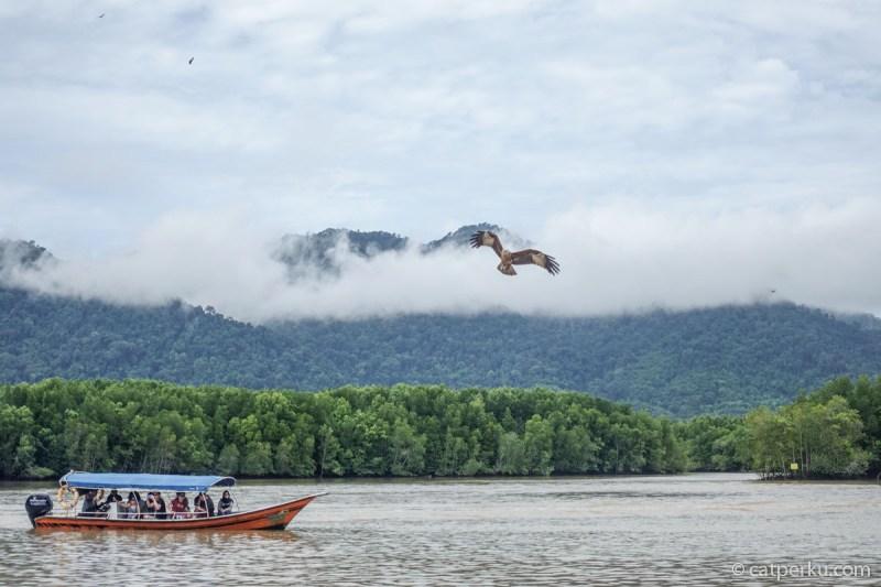 Di eagle point ini saya melihat Elang di alam bebas untuk pertama kali