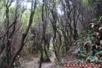 Jalur pertama sebelum batu adalah hutan seperti ini