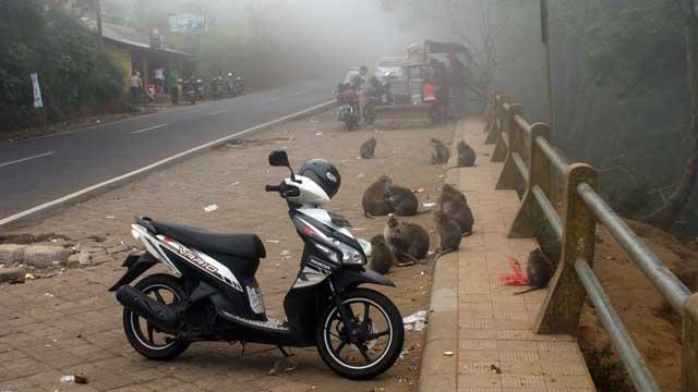 Iya, bisa lebih dekat dengan alam, dengan monyet juga. Hihihiii :D