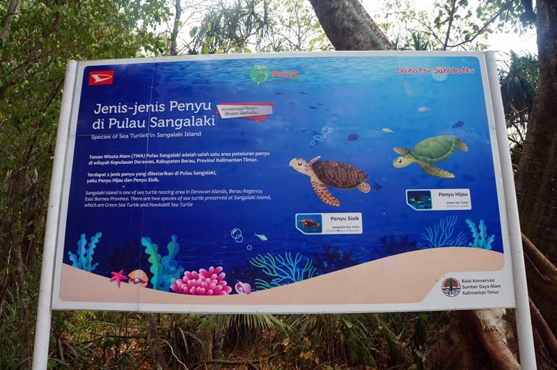 Jenis-Jenis Penyu yang ada di Pulau Sangalaki