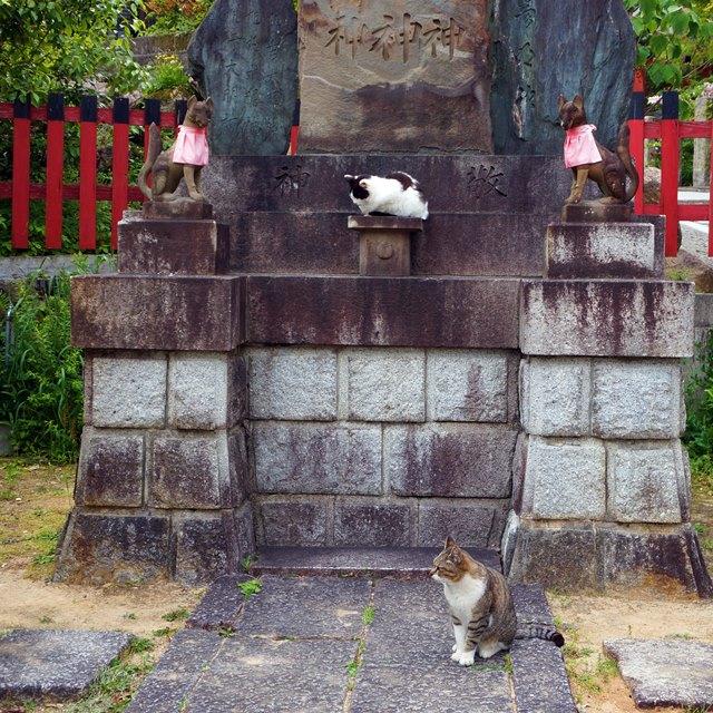 Kalau beruntung, di Fushimi Inari bisa ketemu dewa kucing juga :p