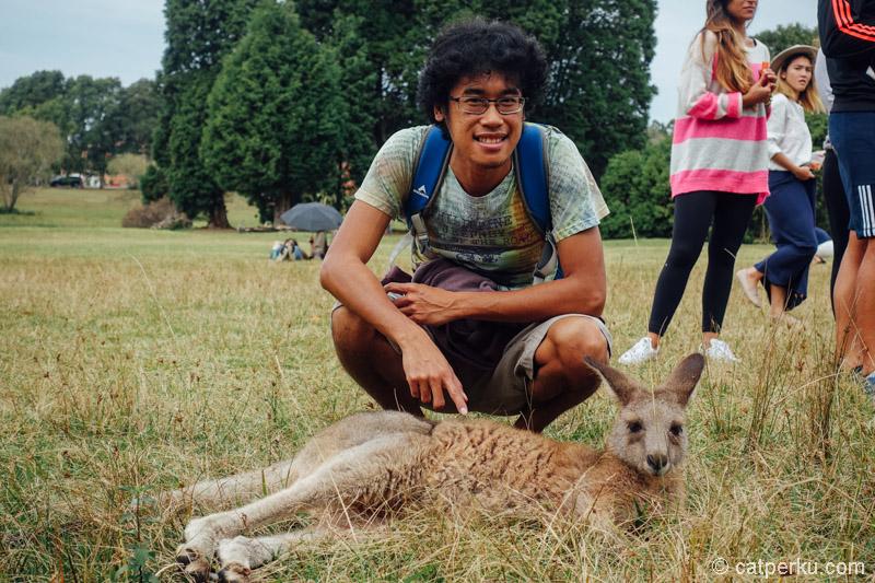 Kanguru yang satu ini lagi males banget kayaknya, dicolek-colek tetep diem aja!!