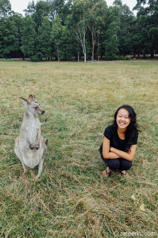 """Kata si Kanguru: """"Ni cewe disebelah lagi ngapain seh?"""""""