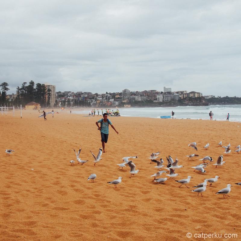 Kerjaan saya di Sydney cuma ngejar burung camar di Manly beach saja? Eh, enggak juga deh :D