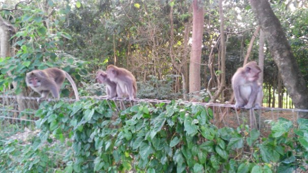 Main ke Monkey Forest, godain itu monyetnya~