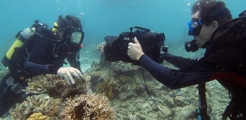 Menyelam di great barrier reef
