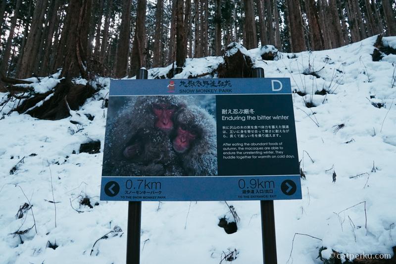 Mereka bertahan hidup di kejamnya musim dingin dengan berendam di Onsen.