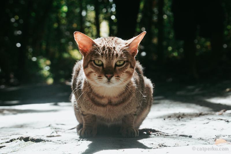 Namanya krispy, kucing peliharaan ranger taman nasional. Lucu ya!