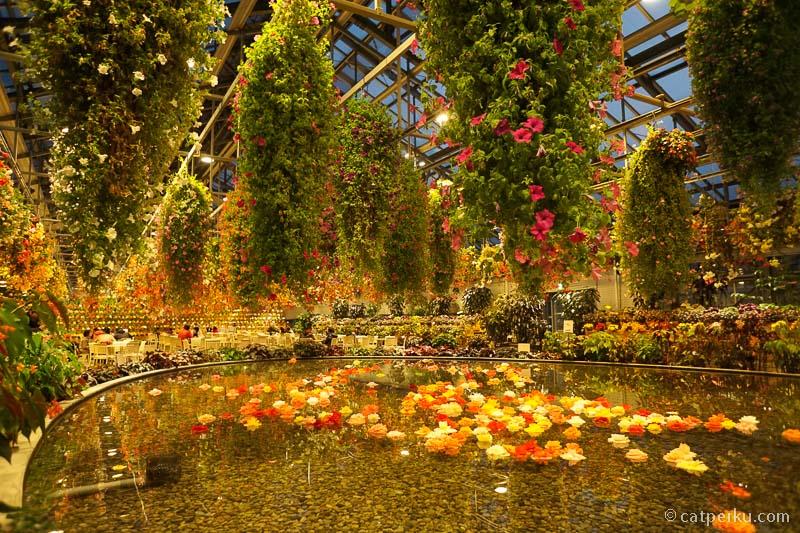 Sambil menunggu gelap, bisa berkeliling dulu di Taman Bunga Begonia ini.