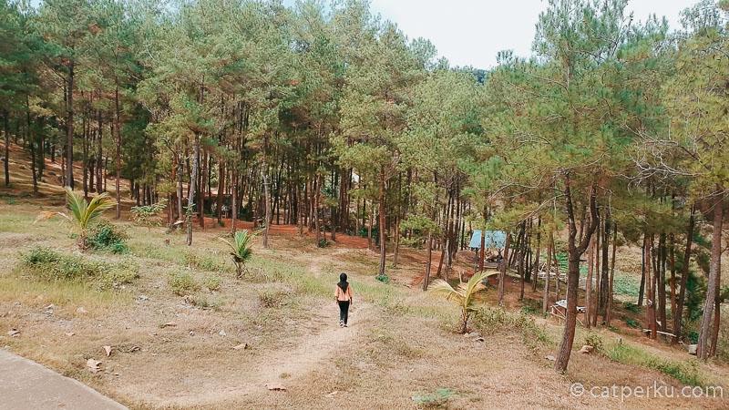 Sebagian besar area Ranu Gumbolo Tulungagung ini berupa lahan yang dipenuhi opleh pohon rindang.