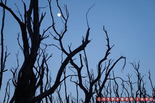 "Saya menyebutnya ""Full Moon and The Dead Forest"", beginilah perpaduan suasana menjelang pagi dan bulan yang masih bersinar di langit."