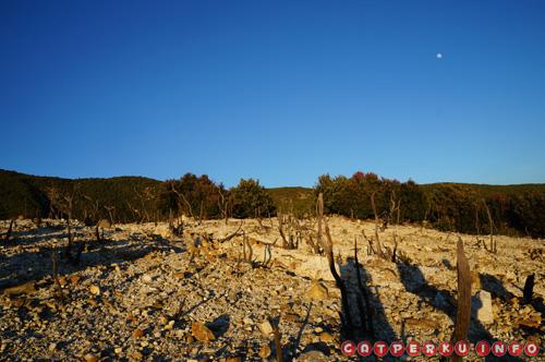 Pagi hari di hutan mati gunung papandayan juga enggak kalah cantik. Ditambah lagi dengan pemandangan bulan yang belum hilang dari langit.