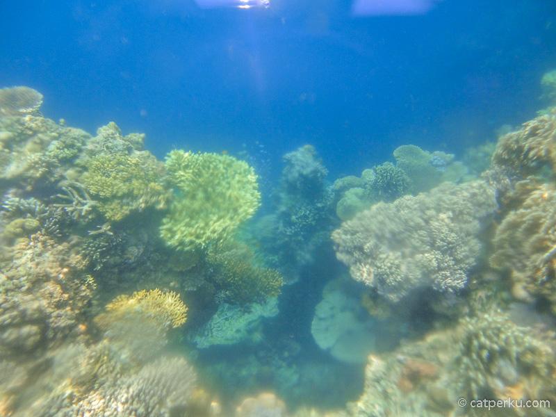 Terumbu karang cantik di sekitar Menjangan