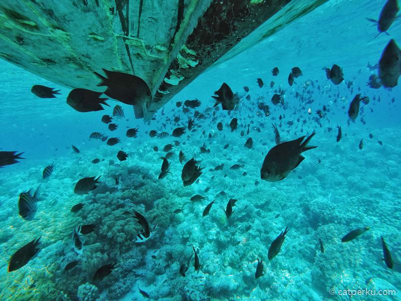 Underwater world di Tomia memang tidak diragukan lagi keindahannya.