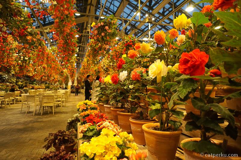 Yang suka dengan bunga warna warni pasti senang keliling tempat ini.