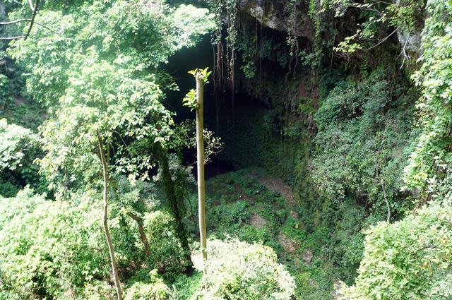 Hutan purba yang berada di dasar Goa Jomblang Cave.