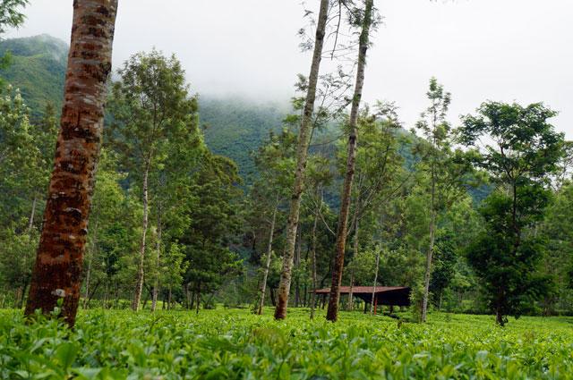 Bagaimana? Seger enggak kalau liburan ke Agrowisata Tambi ini? :D