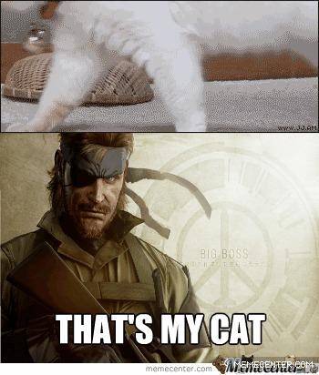 That's My Cat Meme  Cat Planet  Cat Planet