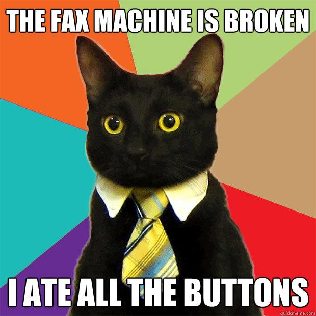 the fax machine cat
