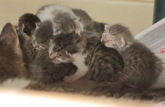 Metro Cat Rescue saved these kittens from a one-way ride to the junk yard!