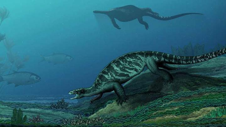 tortuga-ancestro2